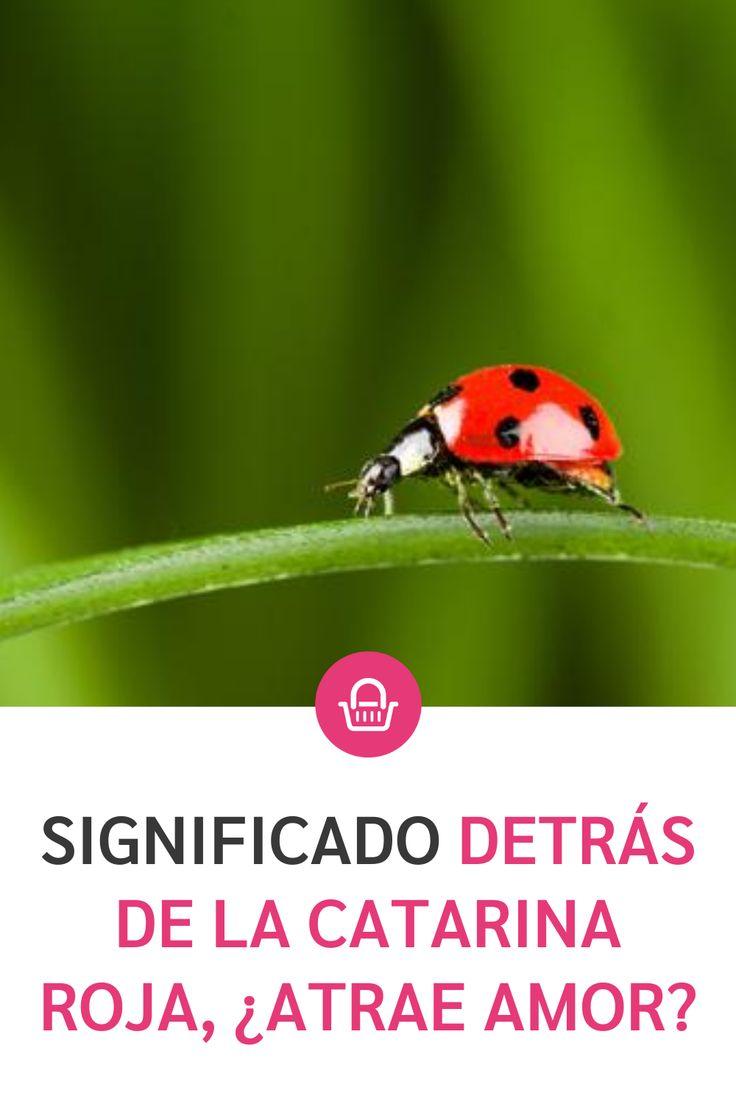 Las catarinas son un bonito insecto con múltiples significados, conócelos y averigua por qué es tan especial. Truths, Pink, Wellness, Magick, Bonito, Plants