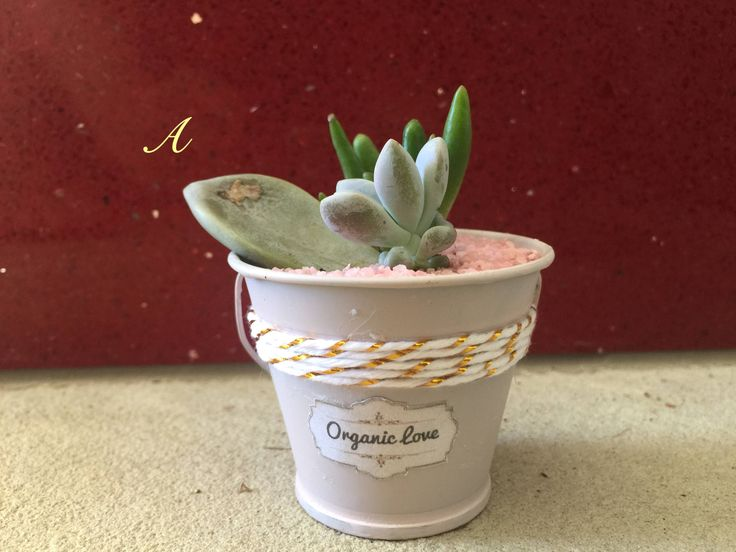 DIY-Baby succulent with pot and sand kit by LittleCompanyM on Etsy