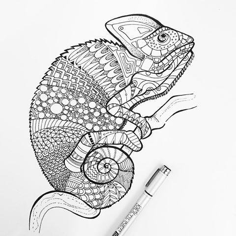chameleon illustrationsophia dei. #chamäleon #