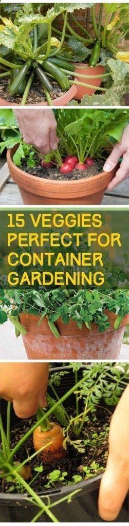 Container gardening, container #gardening hacks, popular pin, gardening, gardening tips, DIY garden, indoor gardening, vegetable gardening #indoorvegetablegardeningdiy #urbangardeningtips