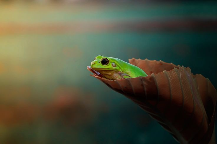 tree frog pic - Full HD Backgrounds by Edmonia Robertson (2017-03-18)