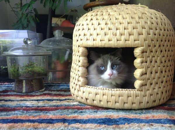 Gras Chi Sekkikawa cat house