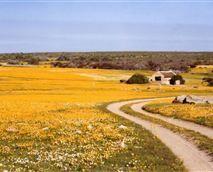 Papkuilsfontein, Niewoudtville