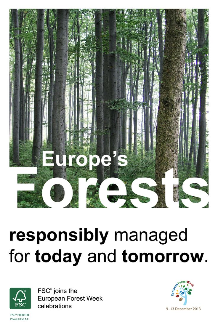 It's European Forestry Week! #FSC joins the #EFW2013 celebrations!  Europe's forests – responsibly managed for today and tomorrow.  #FSC provides a #connection between the #forest and the end user of forest #products by ensuring that products with the FSC #label uphold #principles and #criteria which deliver the highest #social and #environmental benefits.