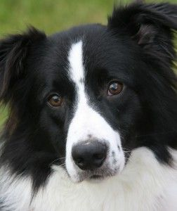This is a great place for border collies, the staff really love the dogs and cats, and are understanding with upset owners.