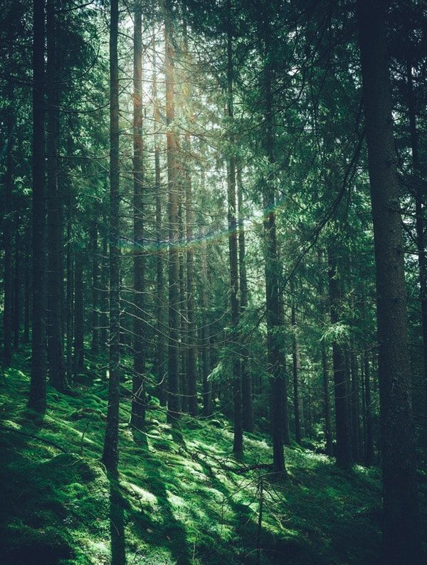 View Of Forest Wallpaper In 2021 Green Nature Wallpaper Forest Wallpaper View Wallpaper Iphone wallpaper green forest