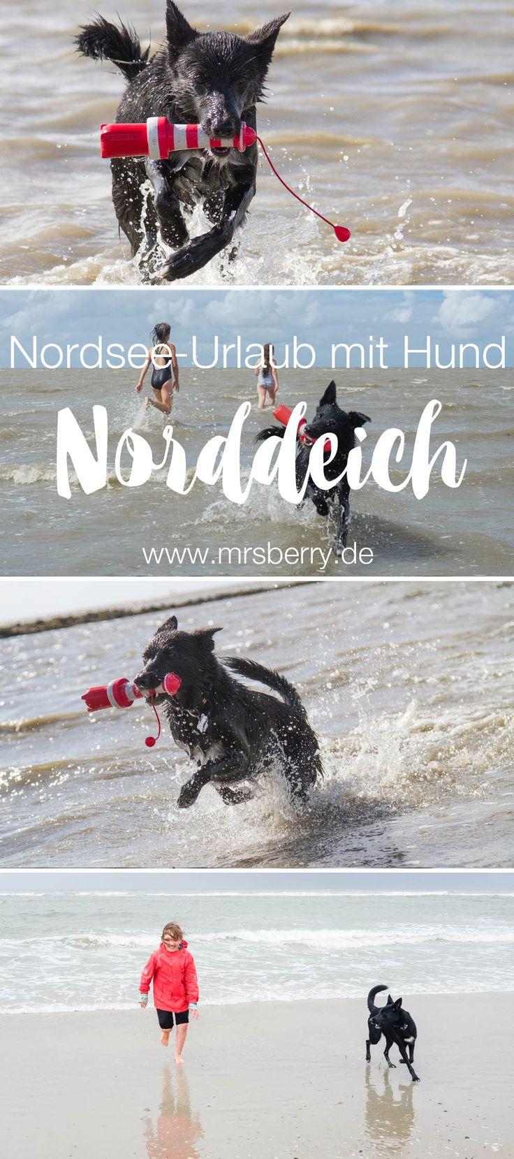 Nordsee Urlaub mit Hund und Kind | 16 Freizeittipps für Familien in Norddeich und Umgebung | mit tollem Hundestrand an der Nordsee