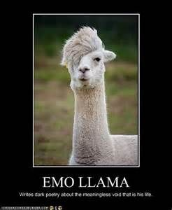 Llamas Funny Emo Memes - Bing images