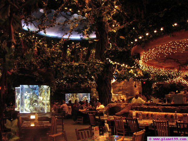 17 Best Ideas About Rainforest Cafe On Pinterest Cafe Strawberry Refreshin