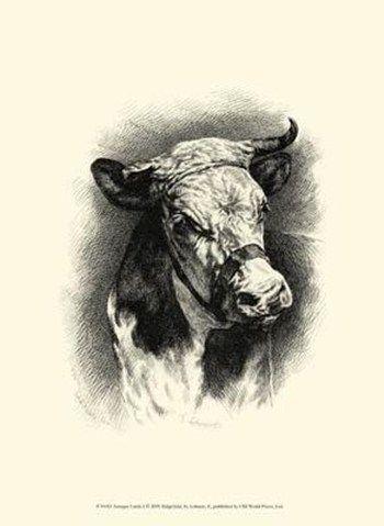 1000 Images About Vintage Farm Animal Prints On Pinterest