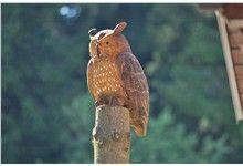 Dřevěná vyřezávaná socha sovy