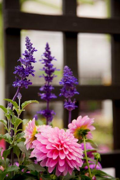 236 best wisconsin native plants images on pinterest