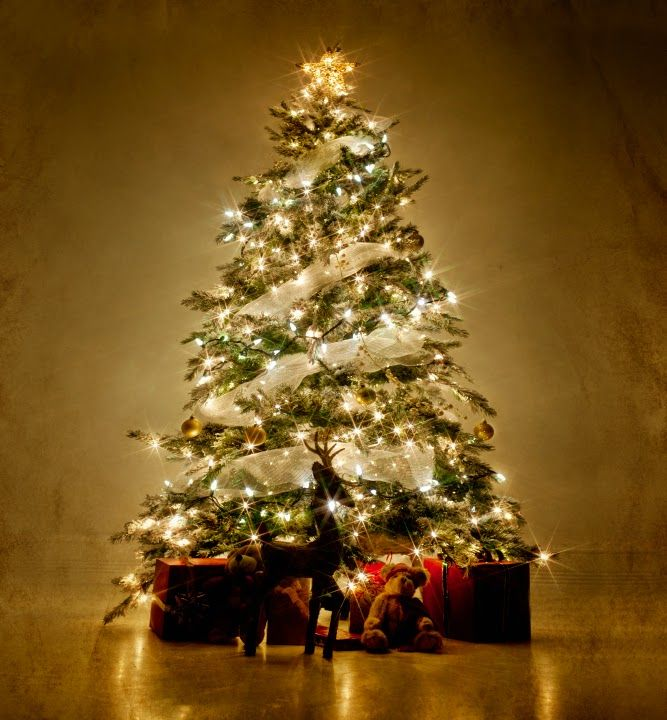 Here is a list of Merrry Christmas tree ideas - http://www.happychristmasimages.com/2014/12/merry-christmas-tree-ideas-and-images.html