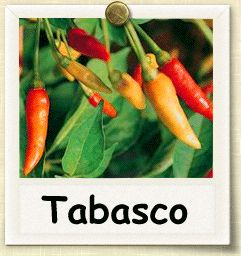 How to Grow Tabasco Pepper | Guide to Growing Tabasco Peppers