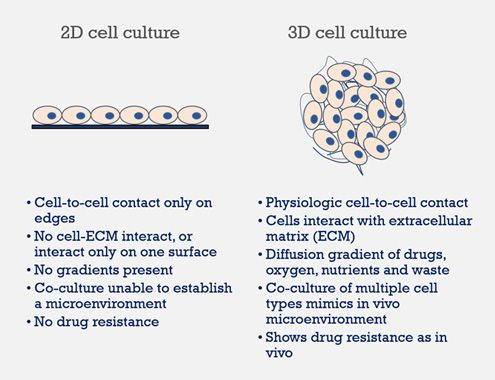 3D-Based Drug Discovery Services