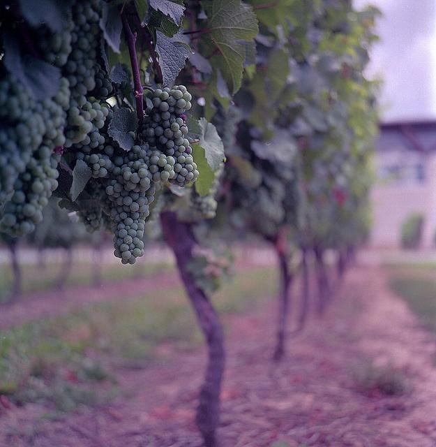 Jackson & Triggs Winery...Canada #taninotanino #vinosmaximum