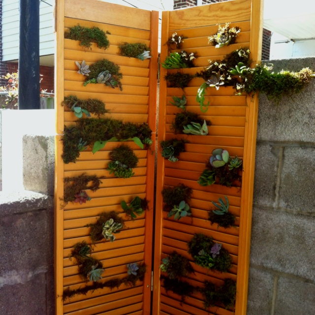 Living Succulent Wall I Made Out Of An Old Closet Door For The Backyard :)