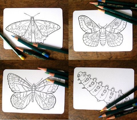 Colouring-in Cards: Insects   Hello Pretty. Buy design.