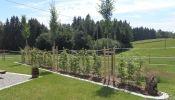Hohe Bäume,  niedrigere Sträucher als Sichtschutzhecke. Fachgerecht geplant und gepflanzt vom Maschinenring, gesichert mit Baumpfählen und eingefasst von einer Rasenkante aus Granit.