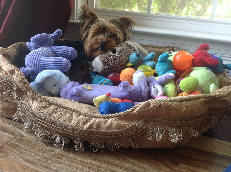 toys yorkies like to play with