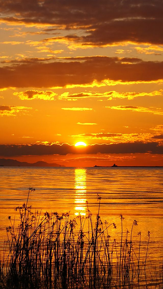 Golden Hour. sunset iphone wallpaper iPhone