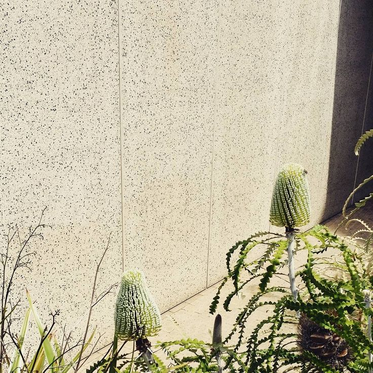 """11 Likes, 1 Comments - Ellie Jenkins (@paperfortdesigns) on Instagram: """"Banksia blooming in a concrete jungle #perthcity #statelibrarywa #perthwestralia #banksia…"""""""