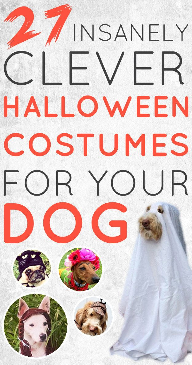 27 Insanely Clever Halloween Costumes For Your Dog