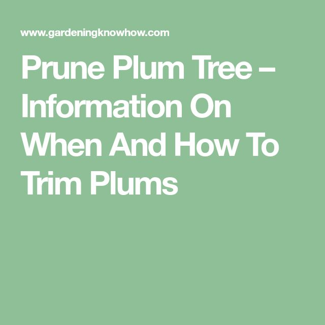 Prune Plum Tree – Information On When And How To Trim Plums