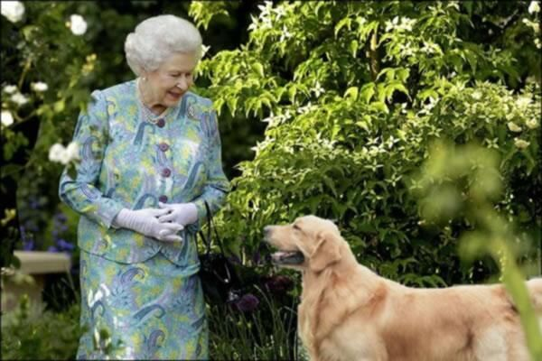 monty's dog Nigel - Google Search