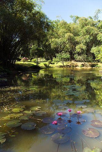 The Royal Botanical Garden Peradeniya Kandy Sri Lanka Www Secretlanka