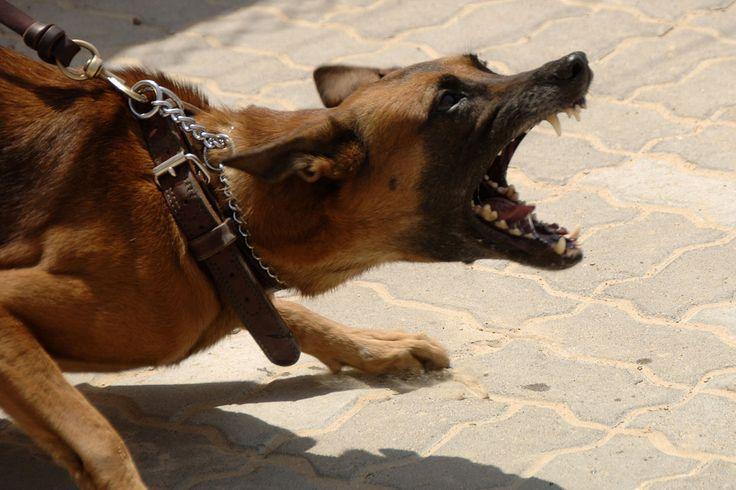 Někteří pohádkoví hrdinové rozuměli řeči zvířat. Jiří Ščučka jím není a přesto to umí. Tak, jako on, dokáže se psy komunikovat málokdo. Alespoň to o něm říkají všichni policisti a záchranáři napříč celým světem, kteří jeho cvičené psy mají.