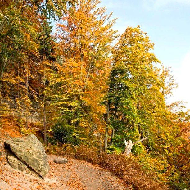 Podzim Česko Švýcarska #czech#nature #wildlife #autumn #leaf #zvejka