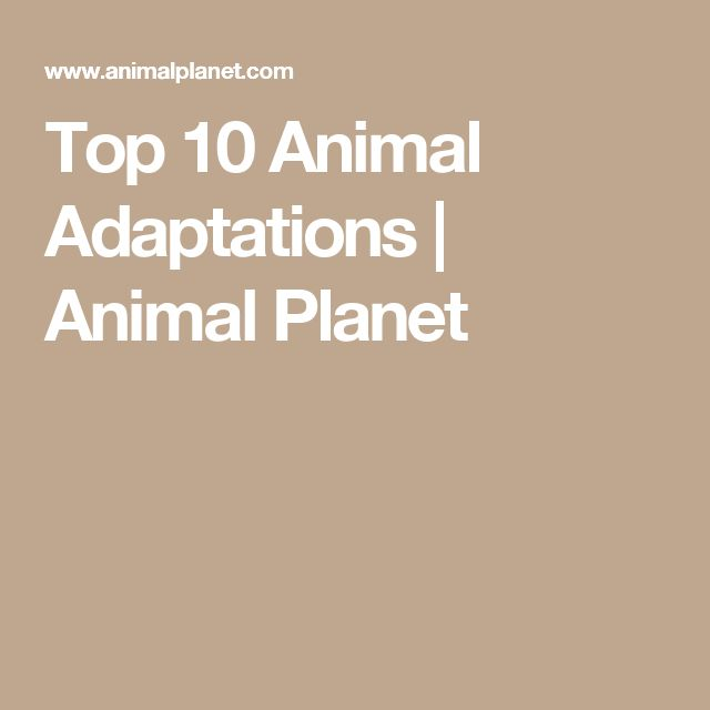 top 10 animal adaptations Africa's top 10 safari animals and where to see them share pin they have several fascinating adaptations, including webbed feet.