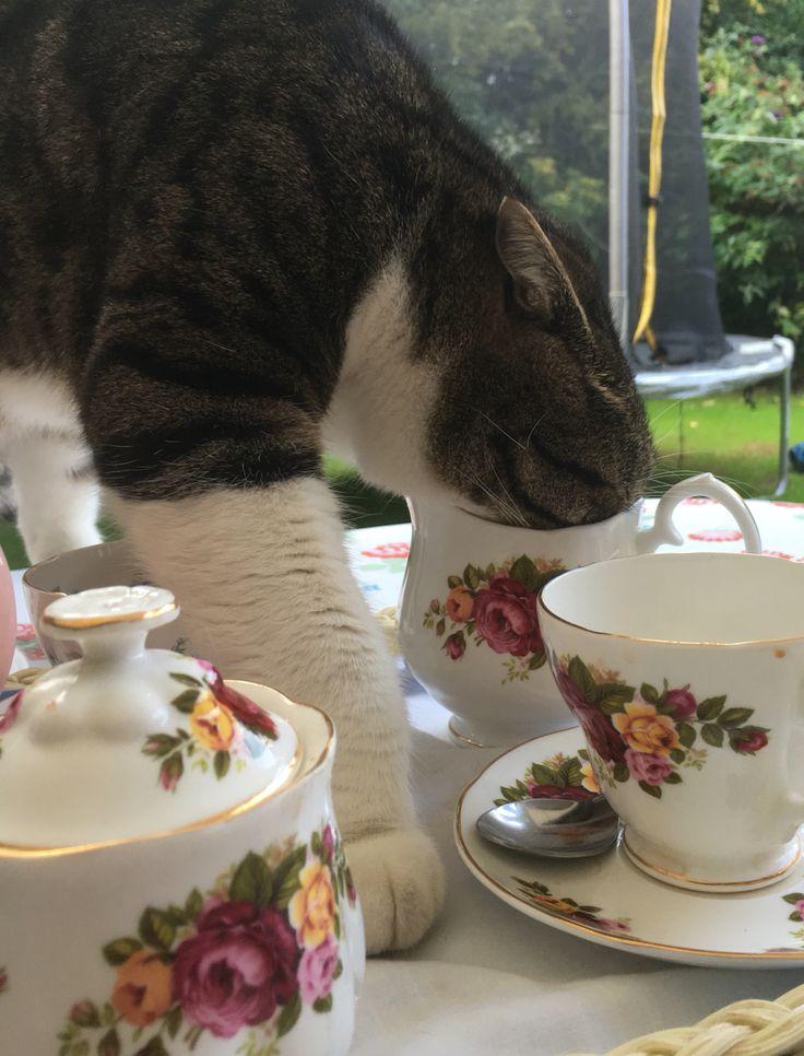 Tea cup cat -stop pinching my milk