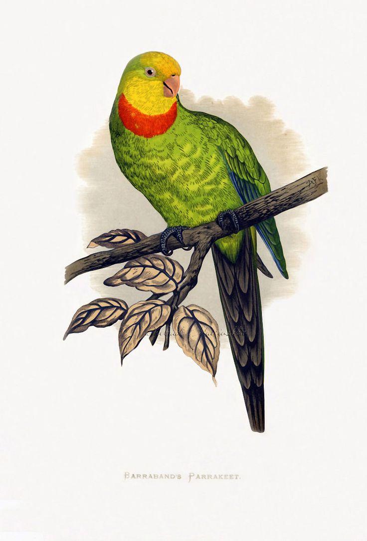 1154 best VOGELTEKENING images on Pinterest | Birds, Art drawings ...
