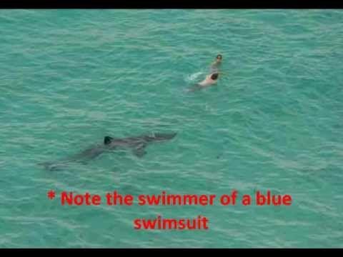 Alligator vs shark attacks - photo#53