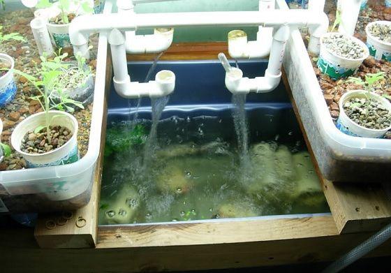 323 best hydro aquaponics images on pinterest aquaponics for Hydroponics fish tank