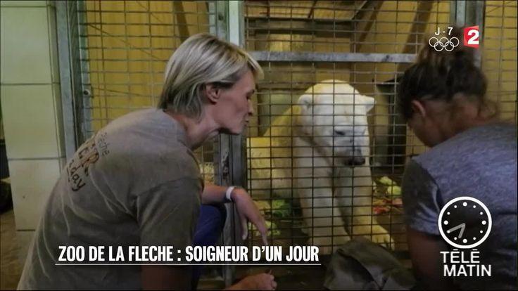 Faune - Zoo de la Flèche : soigneur d'un jour - 2016/07/29