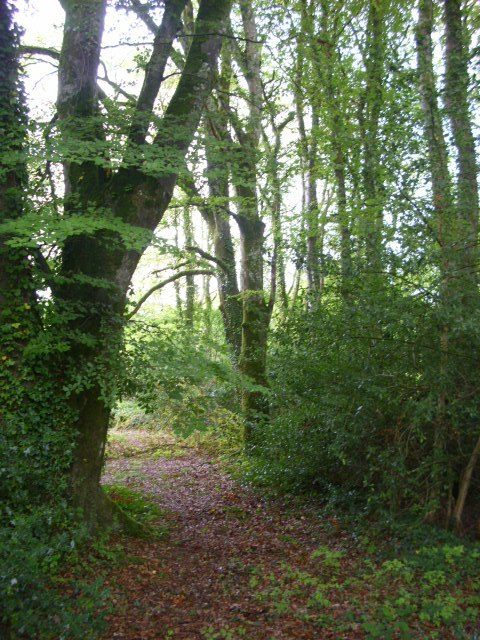 Nature S Way St John S Wood