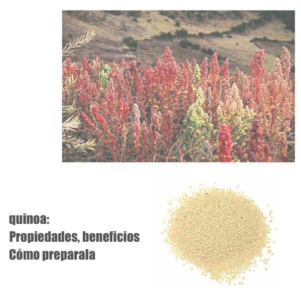 Quinoa propiedades nutricionales