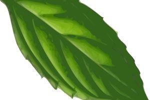 Mascarilla para el cabello de hierbabuena - Trucos de belleza caseros
