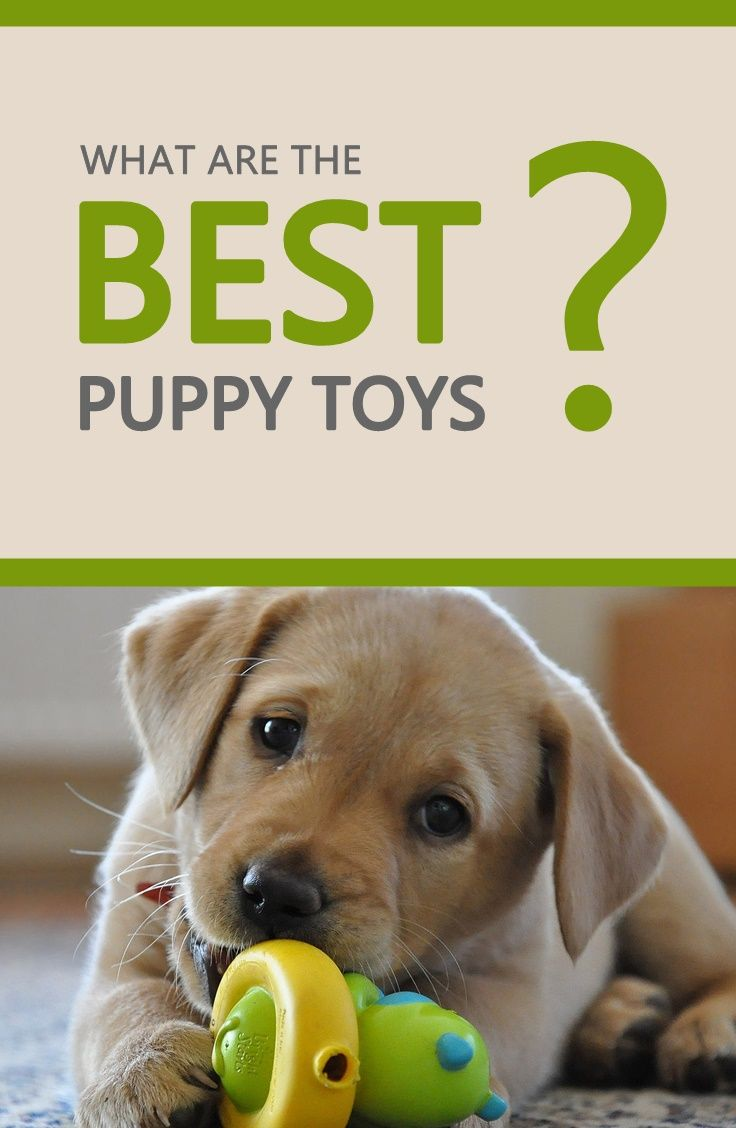 Heres A List Of The Best Puppy Toys It Covers All Types Of Toys