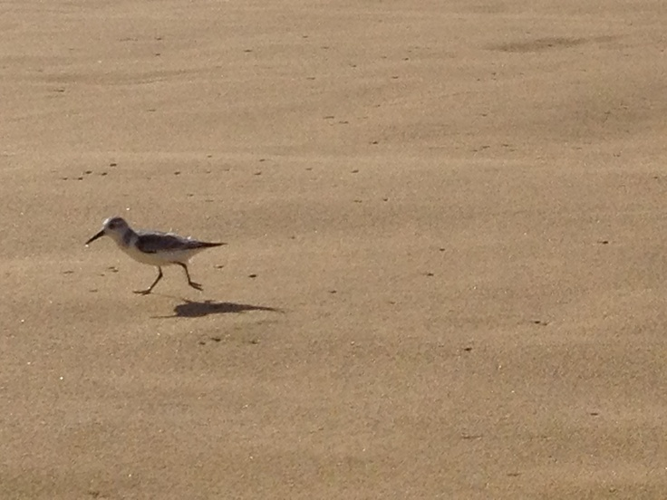 Hopping bird love bird project pinterest for Birds project