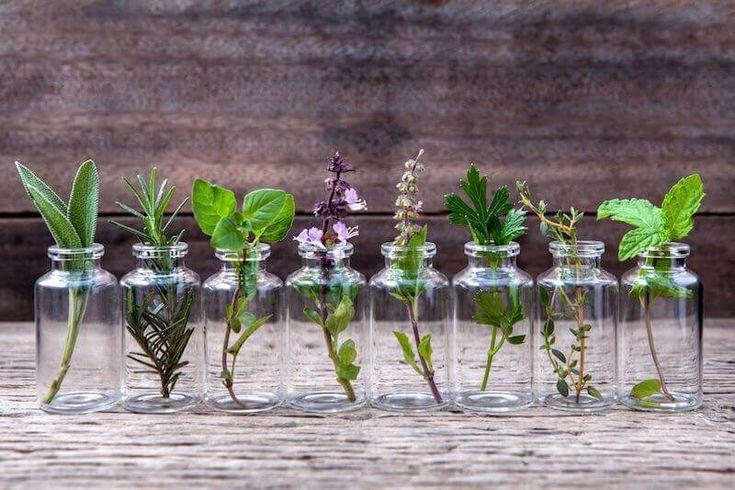 10 rostlin, které můžete pěstovat ve vodě celý rok
