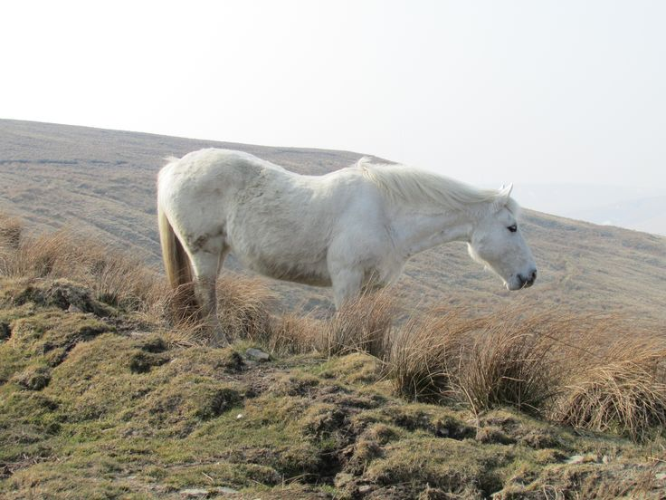 White Horse - This photo of the horse simply stunning, this photo was taken whilst walking on the hills. This photo fits perfectly into the spring album!