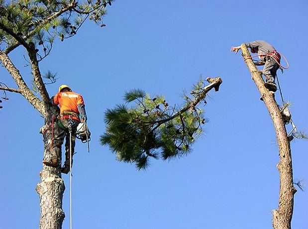 Tree Cutting Service Sewell NJ