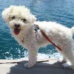 Potty Training a Boat Dog