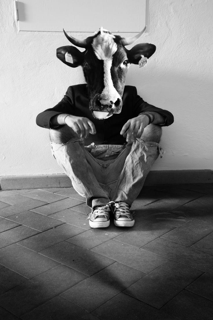 mucca - toro - persona - elegante - jeans rotti - tuta - jeans
