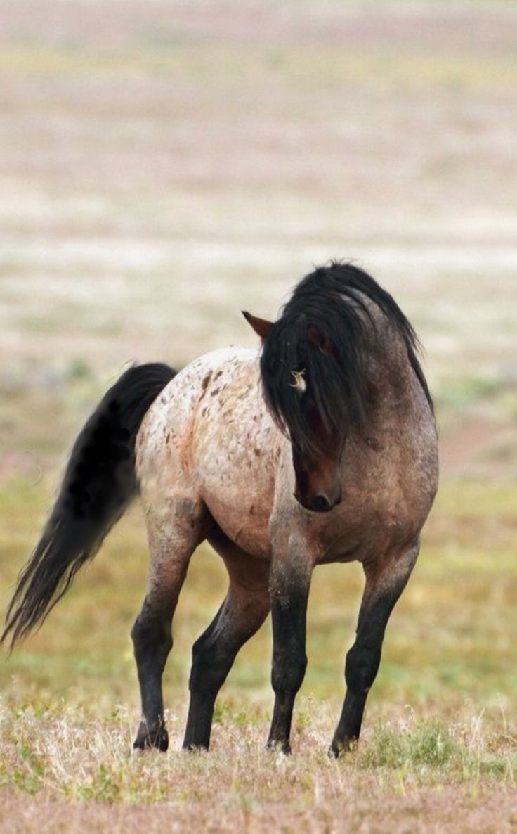 Beautiful Mustang, graceful stunning horse.