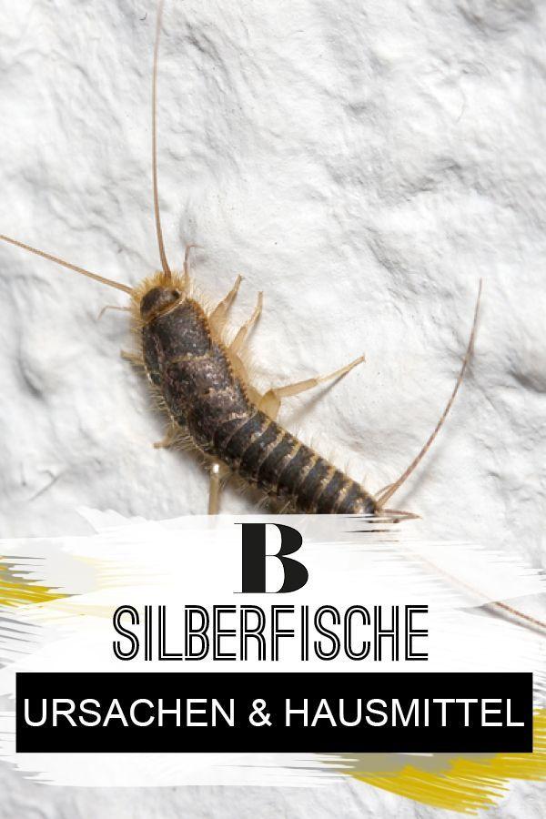 Silberfische Ursachen Und Hilfreiche Hausmittel Silberfische Hausmittel Silberfische Bekampfen